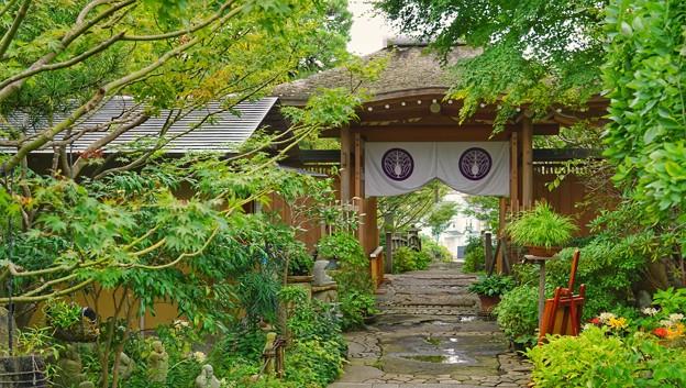 常泉寺(花寺)DSC00719-01