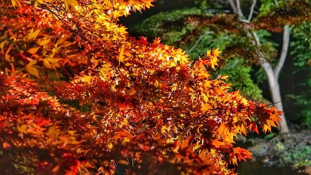 熱海梅園紅葉まつり7