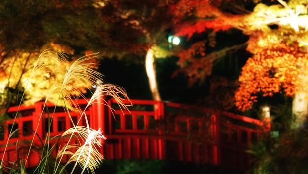 熱海梅園紅葉まつり9