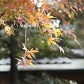 川越カメラ散歩 DSC02245-01