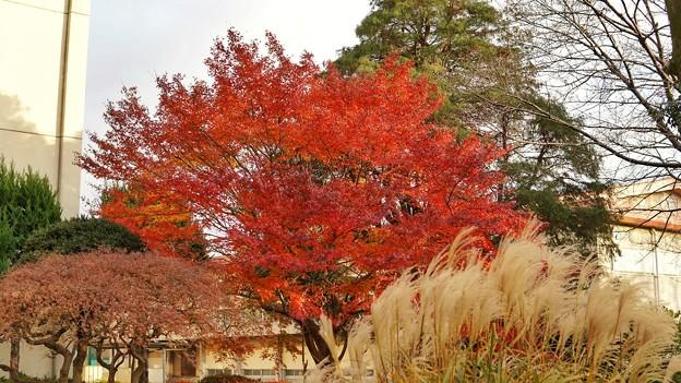 秋の共演・川越 DSC02281-01