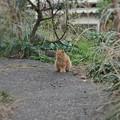 Photos: DSC02434-01城ヶ島・三浦プチ旅