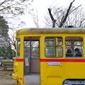 Photos: TON04013-01小金井公園桜まつり