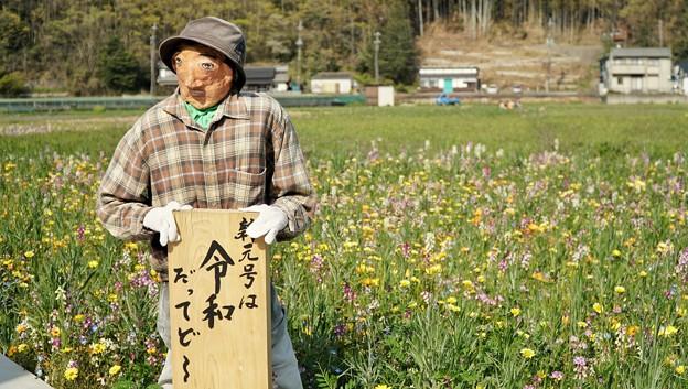 TON04157-01花畑と桜並木と伊豆の旅