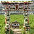Photos: TON04172-01花畑と桜並木と伊豆の旅
