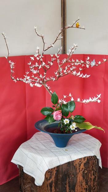 TON04237-01花畑と桜並木と伊豆の旅