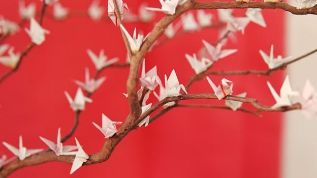 TON04239-01花畑と桜並木と伊豆の旅