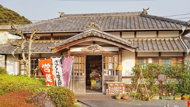 TON04257-01花畑と桜並木と伊豆の旅