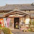 Photos: TON04257-01花畑と桜並木と伊豆の旅
