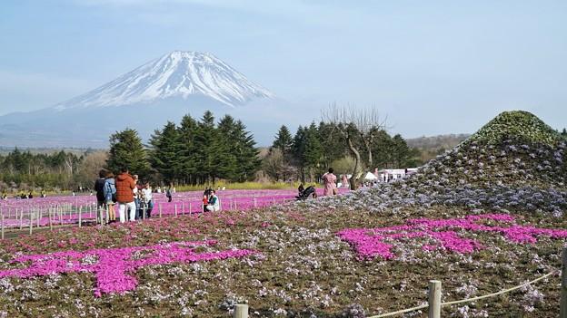 TON04625富士芝桜まつり