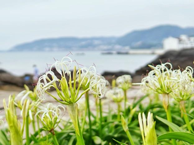 TON05508天神島(佐島)