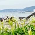 Photos: TON05508天神島(佐島)