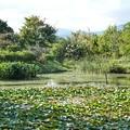 TON06322初秋の大磯港と花菜ガーデン