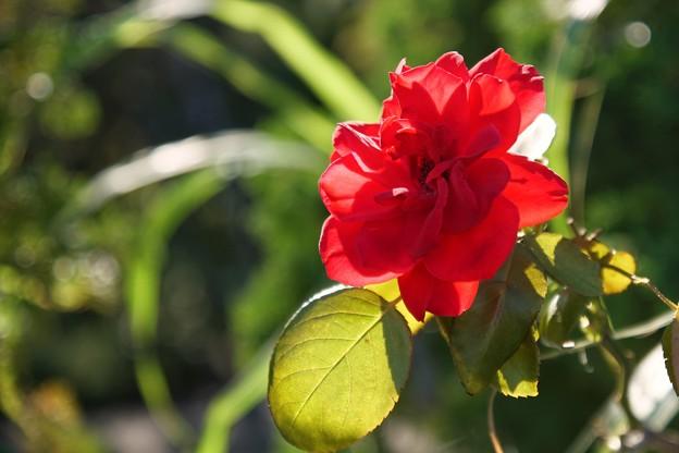 TON06330初秋の大磯港と花菜ガーデン