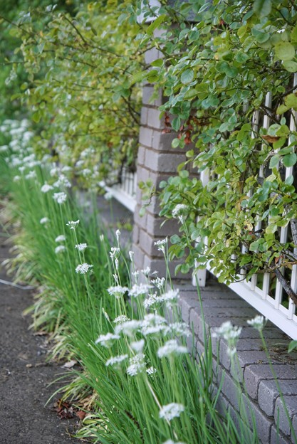 TON06333初秋の大磯港と花菜ガーデン