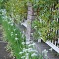 Photos: TON06333初秋の大磯港と花菜ガーデン