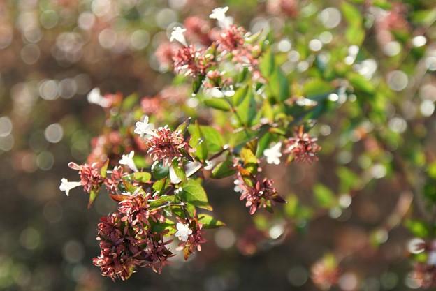 TON06351初秋の大磯港と花菜ガーデン