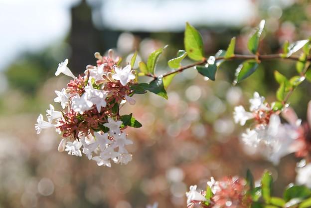 TON06359初秋の大磯港と花菜ガーデン