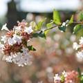 Photos: TON06359初秋の大磯港と花菜ガーデン