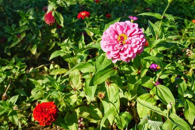 TON06387初秋の大磯港と花菜ガーデン