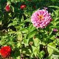 Photos: TON06387初秋の大磯港と花菜ガーデン