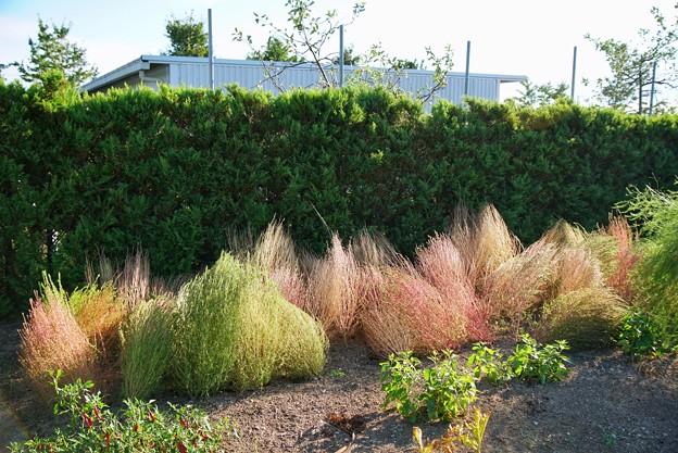 TON06394初秋の大磯港と花菜ガーデン