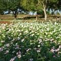 TON06398初秋の大磯港と花菜ガーデン