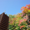 Photos: 談山神社の秋