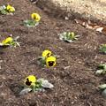 写真: 公園の花