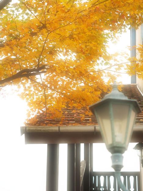 秋色の街角