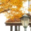 Photos: 秋色の街角