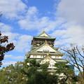 写真: 2008 大阪城@大阪 (1)