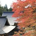 写真: 2010 神護寺の紅葉@京都