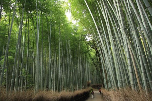 写真: 2016 嵐山 竹林の道@京都