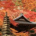 2504 平成の紅葉の見納め@京都