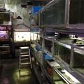 20140506 熱帯魚店南風苑