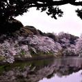 Photos: 風和む
