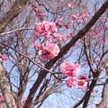 写真: 20100131町田遺跡公園