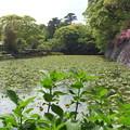 写真: 20100510鳥取手打ラーメン(小田原市)