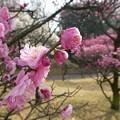 写真: 春