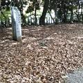 Photos: 常陵郷(とこはか)の森