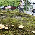 写真: 苔とキノコ