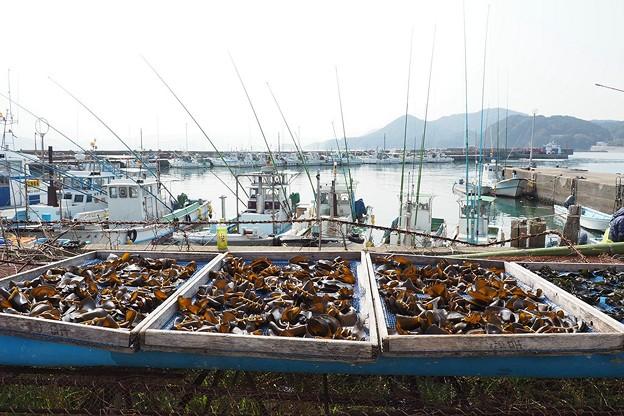 Photos: 答志島にて