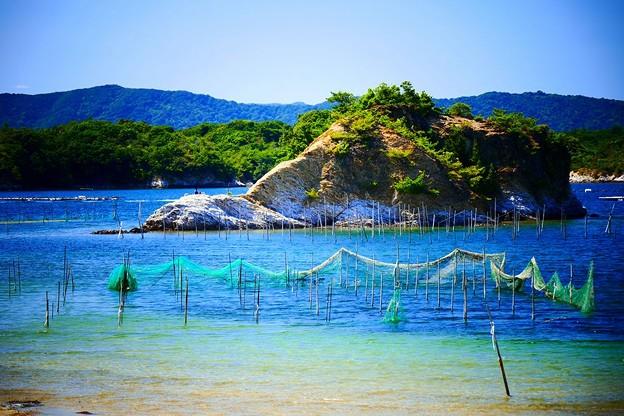 写真: 海苔の養殖?