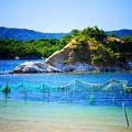 Photos: 海苔の養殖?