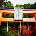 写真: 祓川弁財天の紅葉