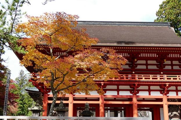 高野山中門の紅葉