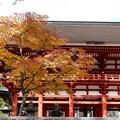 写真: 高野山中門の紅葉