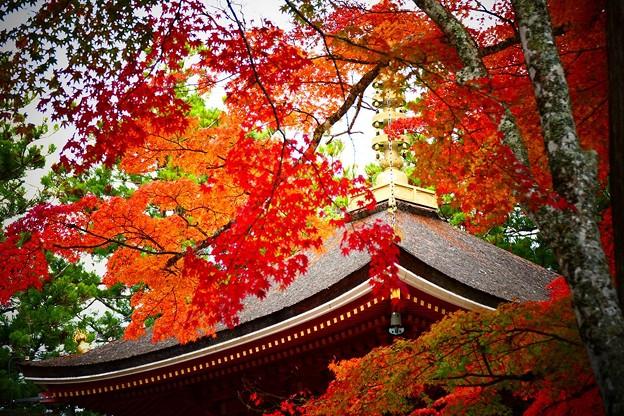 東塔の紅葉