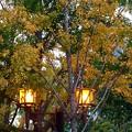 Photos: 銀杏と外灯